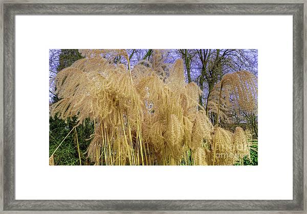 Winter Park Bulrush Framed Print