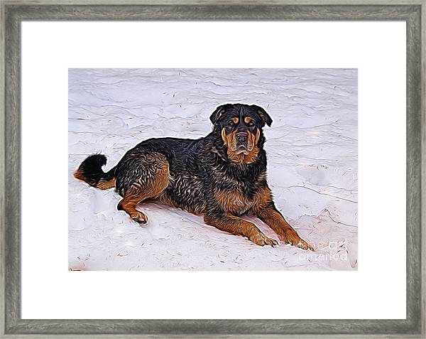 Winter Play Framed Print