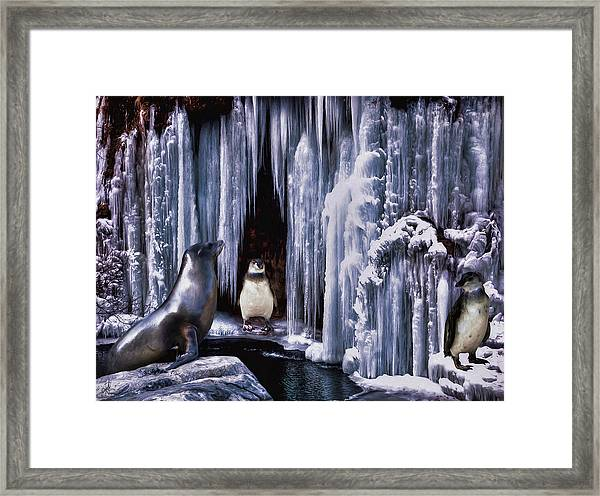 Winter Playground Framed Print