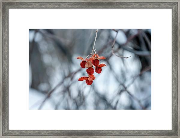 Winter Seeds Framed Print