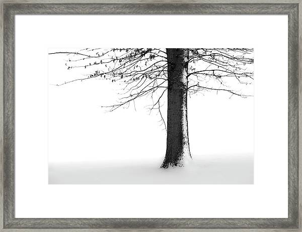 Winter Solitude Framed Print