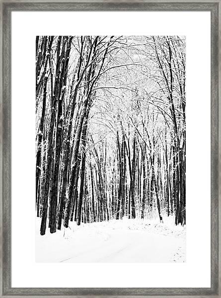 Winter Startk Framed Print