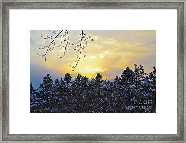 Winter Sunset On The Tree Farm #1 Framed Print