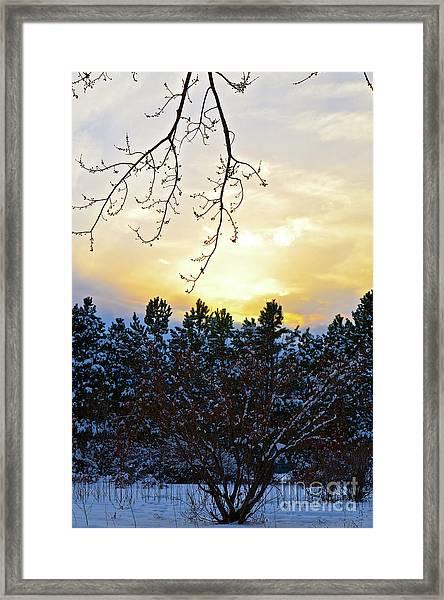 Winter Sunset On The Tree Farm #2 Framed Print