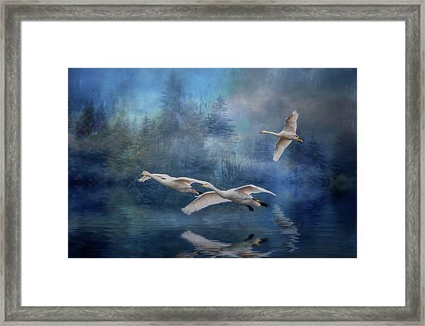 Winter Swans Framed Print