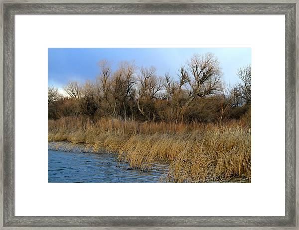 Winter Trees Along The Snake Framed Print