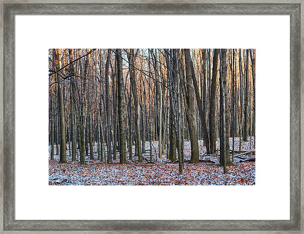 Winter - Uw Arboretum Madison Wisconsin Framed Print