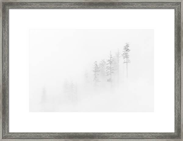 Winter Veil Framed Print