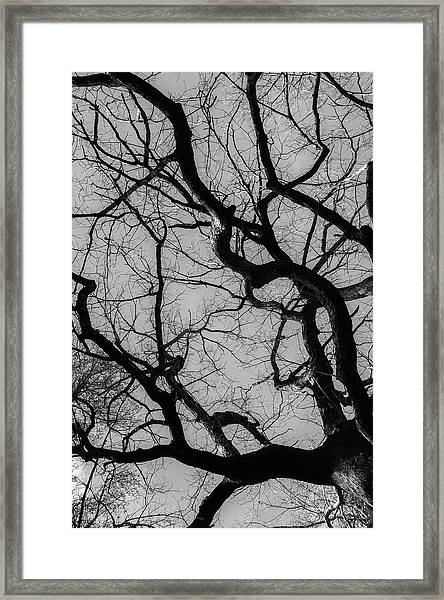 Winter Veins Framed Print