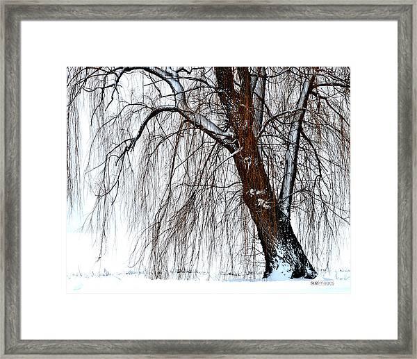 Winter Willow Framed Print