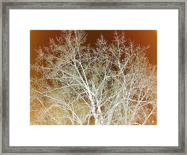 Winter's Dance Framed Print