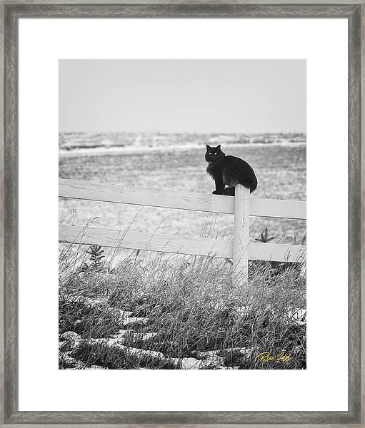 Winter's Stalker Framed Print