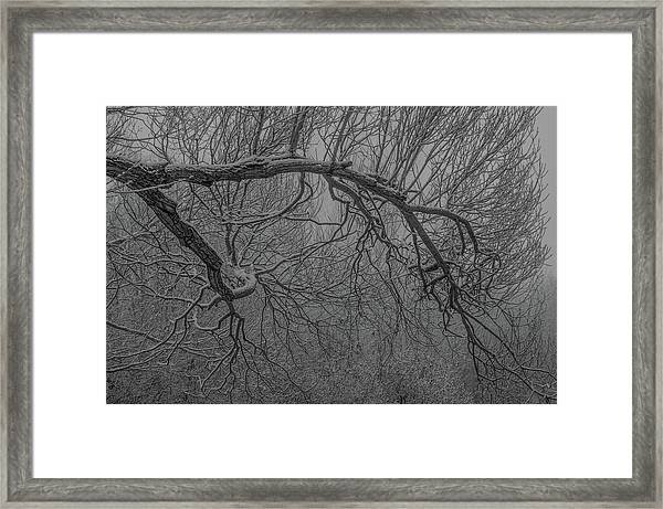 Wintery Tree Framed Print