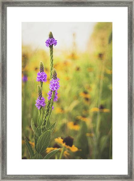 Wisconsin In July Framed Print