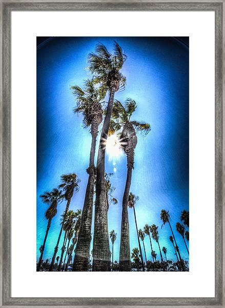 Wispy Palms Framed Print