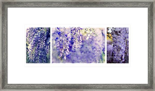 Wisteria Triptych Framed Print
