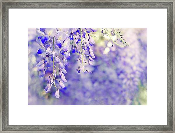 Wisteria Watercolor Framed Print