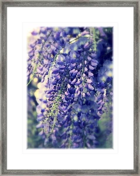 Wisteria Whimsy Framed Print