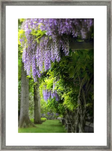 Wisteria Woodland Framed Print