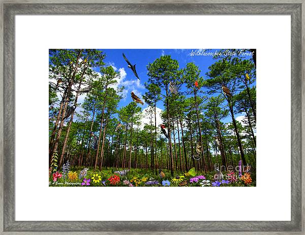 Withlacoochee State Forest Nature Collage Framed Print