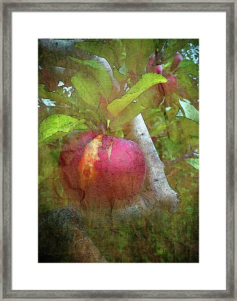 Without Consequence II Framed Print
