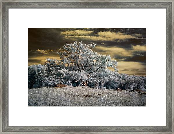 Witness To History Framed Print