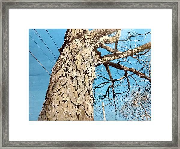 Witness Framed Print