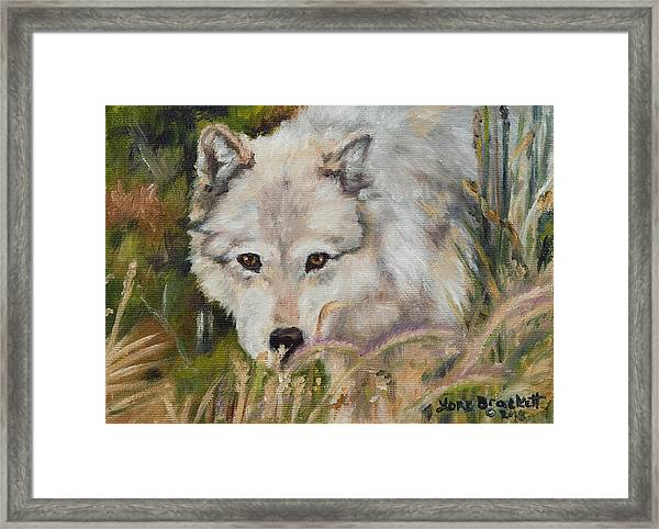Wolf Among Foxtails Framed Print