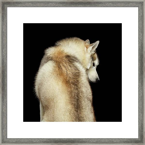 Wolf In Soul Framed Print