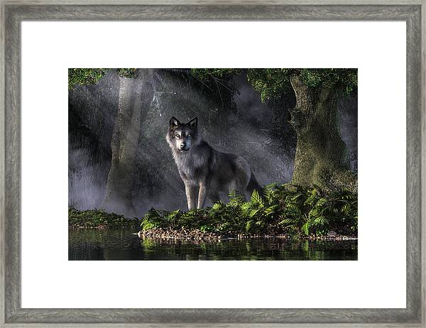 Wolf In The Forest Framed Print