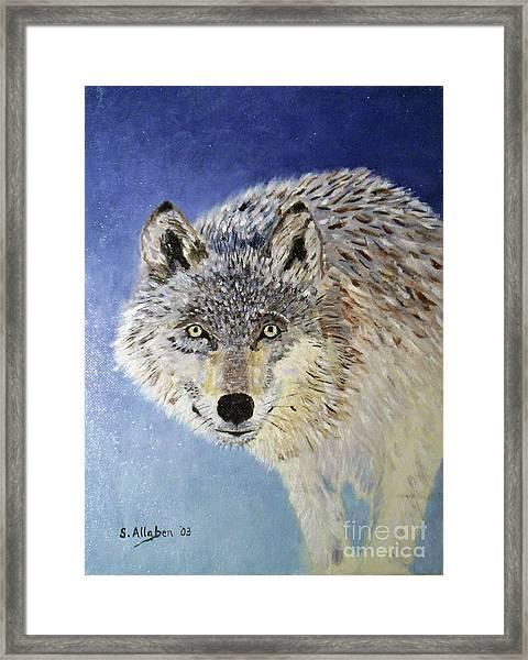 Wolf Study Framed Print