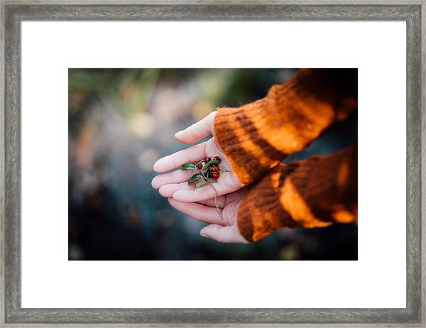 Woman Hands Holding Cranberries Framed Print