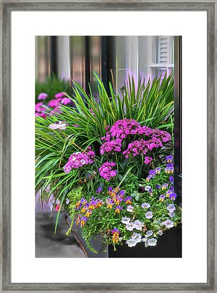 Wonderful Window Boxes Of Charleston Framed Print