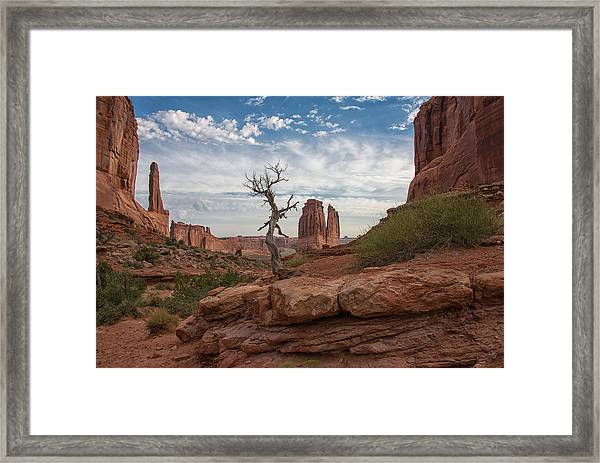 Wonders Along Park Avenue Framed Print