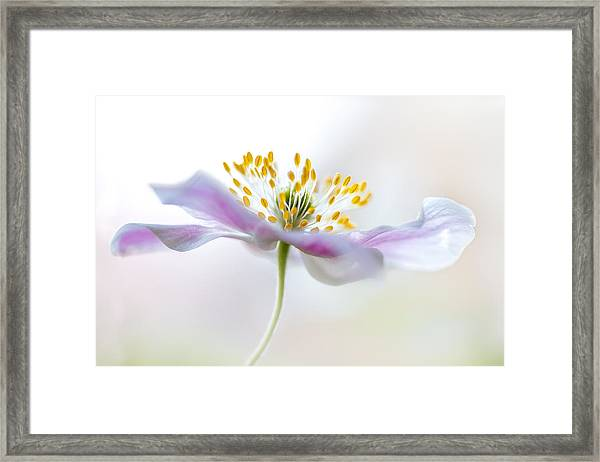 Wood Anemone Framed Print