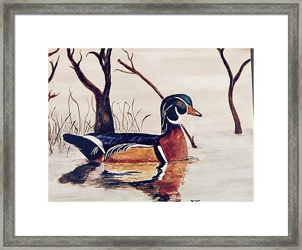Wood Duck No. 2 Framed Print