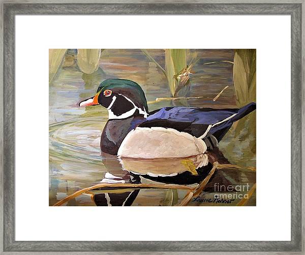 Wood Duck On Pond Framed Print
