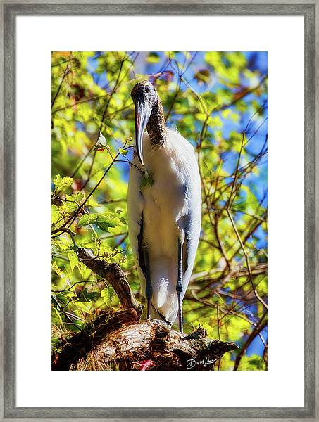 Framed Print featuring the photograph Wood Stork Stare by David A Lane
