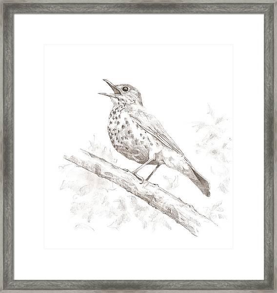 Wood Thrush Framed Print