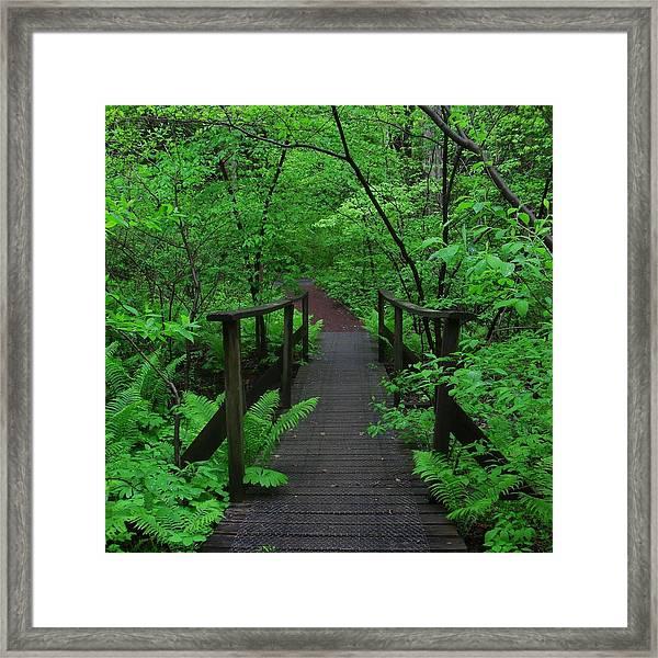 Wooden Foot Bridge Framed Print