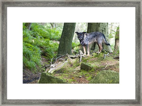 Woodland Dog Framed Print