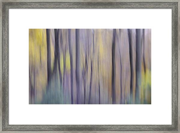 Woodland Hues Framed Print