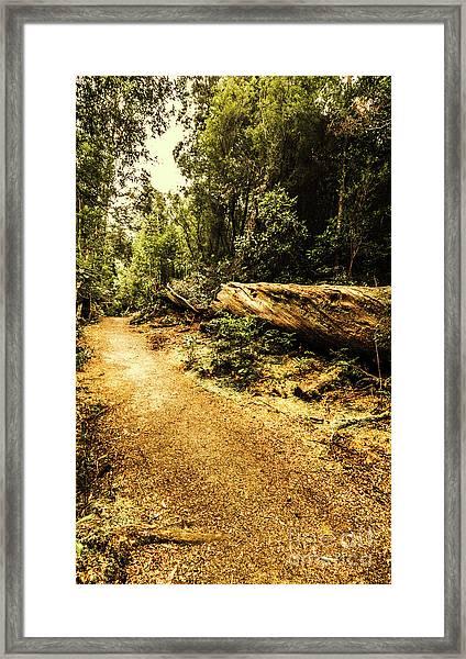 Woodland Nature Walk Framed Print