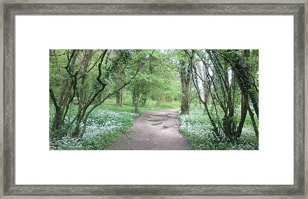 Woodland Path 1 Framed Print