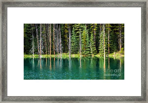 Woodland Reflections Framed Print