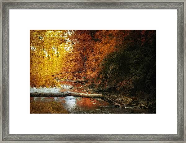 Woodland Stream Framed Print