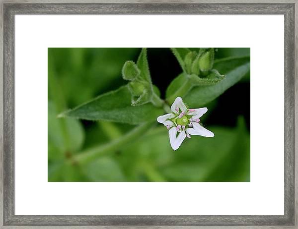 Woodland Wildflower Framed Print