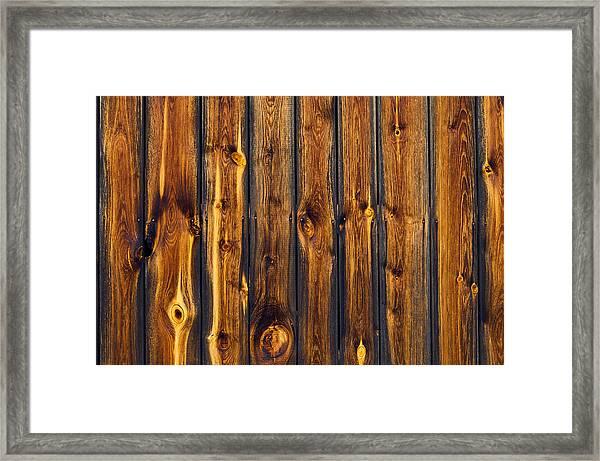 Woody Tiger Framed Print