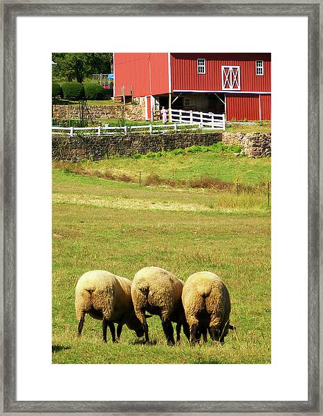 Wooly Bully Framed Print