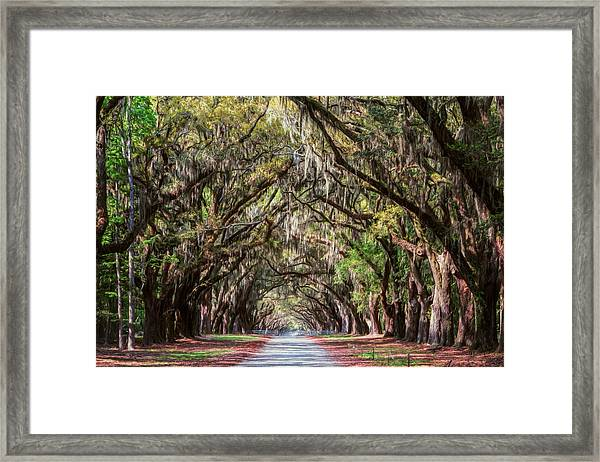 Wormsloe Plantation Oaks Framed Print